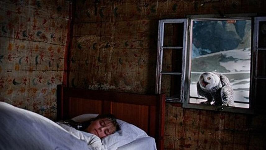 image w8561 - Obras-Primas do Cinema Mundial Que Você Não Deve Ignorar