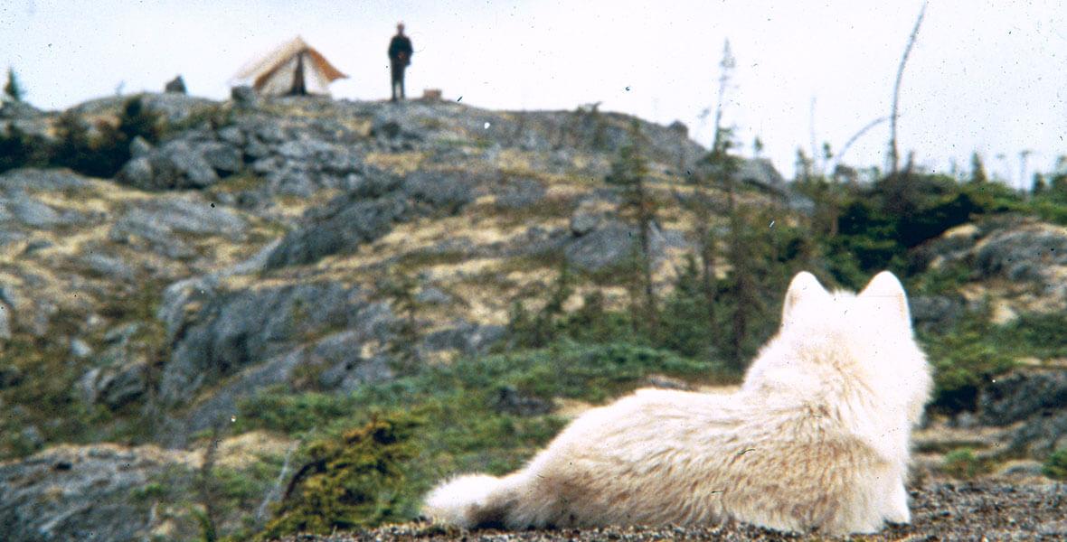 1180w 600h TDID never cry wolf premiere - Filmes em que animais roubam a cena e, acredite, roubarão seu coração