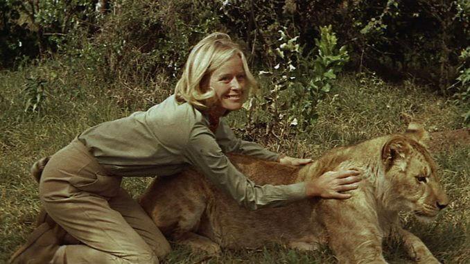 Born Free 678x381 - Filmes em que animais roubam a cena e, acredite, roubarão seu coração