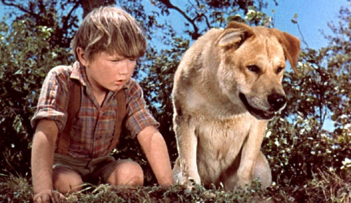 Old Yeller 1957 - Filmes em que animais roubam a cena e, acredite, roubarão seu CORAÇÃO