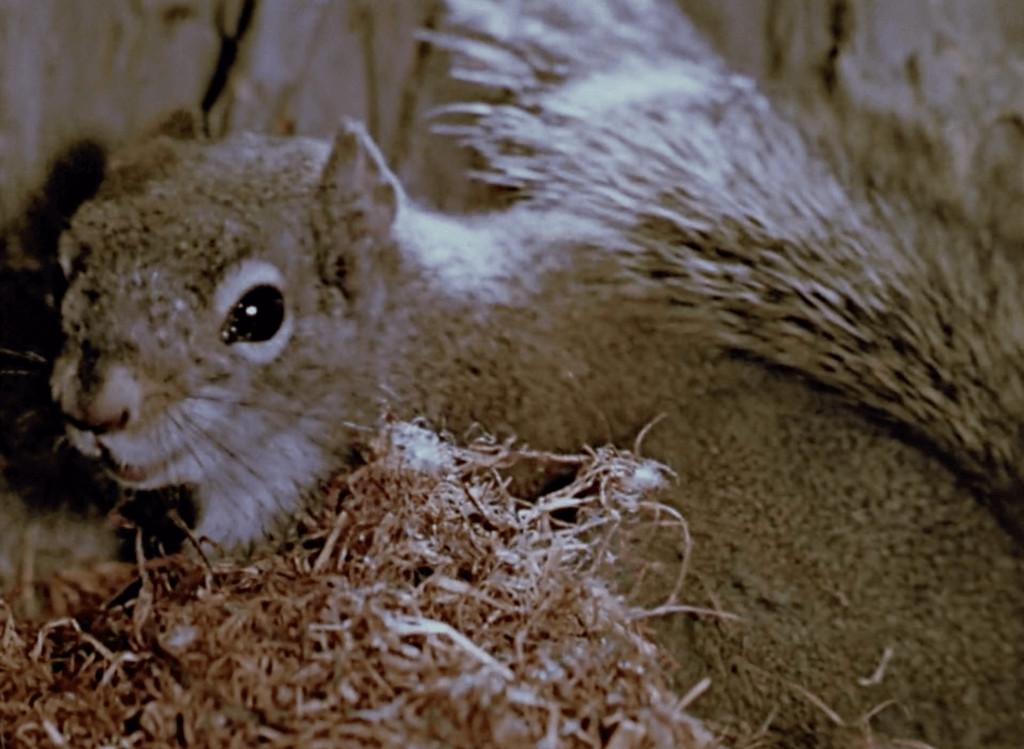 Perri - Filmes em que animais roubam a cena e, acredite, roubarão seu CORAÇÃO