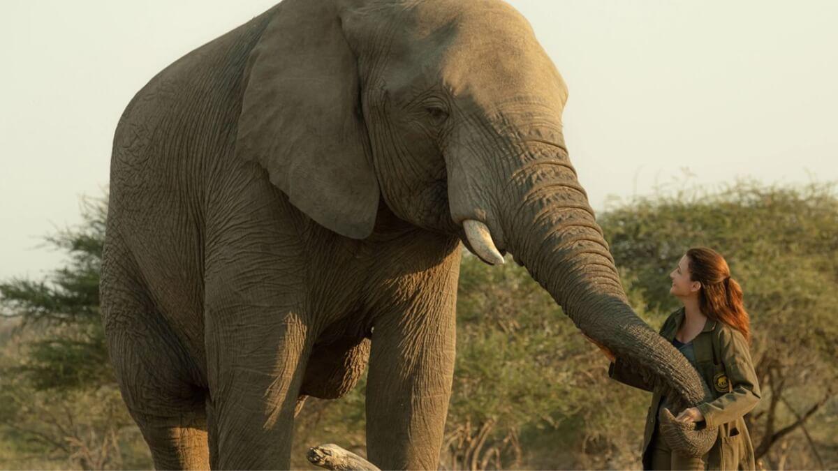 """Holiday in the Wild Netflix Film Elephant Kristin Davis - """"Resgate do Coração"""", adorável filme natalino na NETFLIX"""